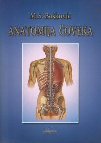Anatomija čoveka