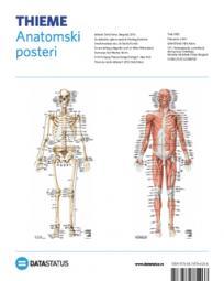Anatomski posteri: kosti i mišići