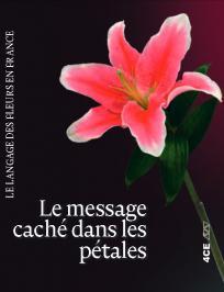 Le message cache dans les petales