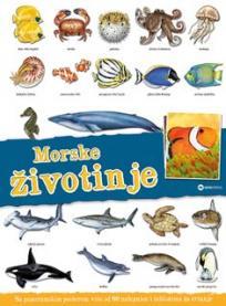 Panorama: Morske životinje