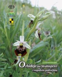 Orhideje na Strahinjščici i susjednim područjima